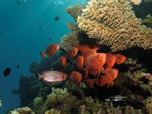 podmořský život.jpg